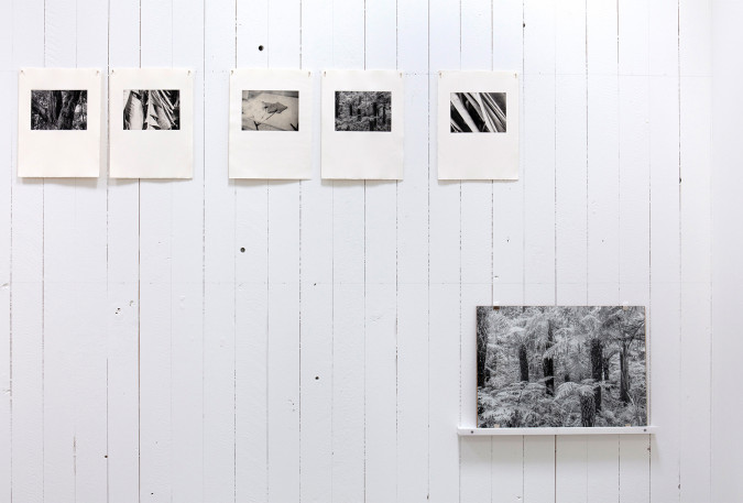 Installation view. Public Garden, photogravure.